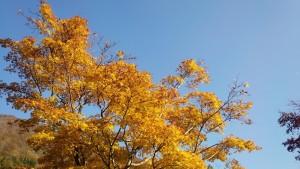 越後湯沢の紅葉