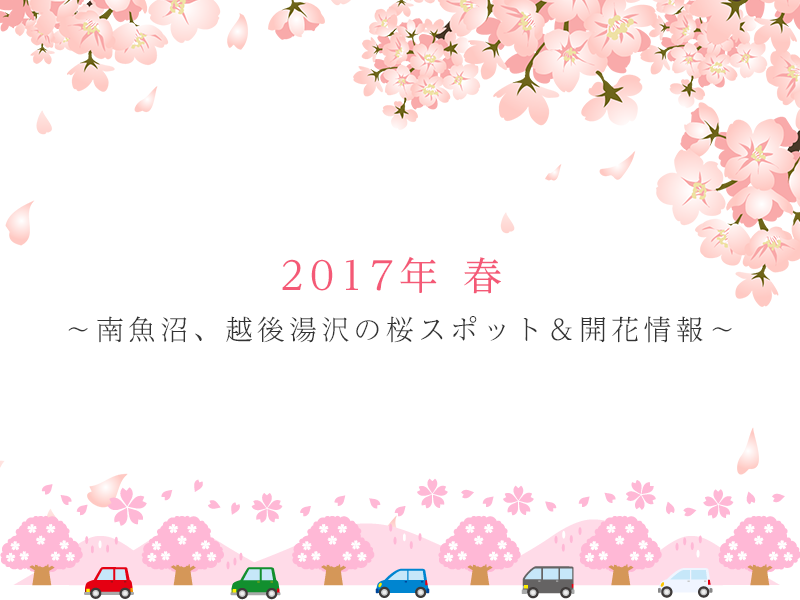 2017年 春 ~南魚沼、越後湯沢の桜スポット&開花情報~