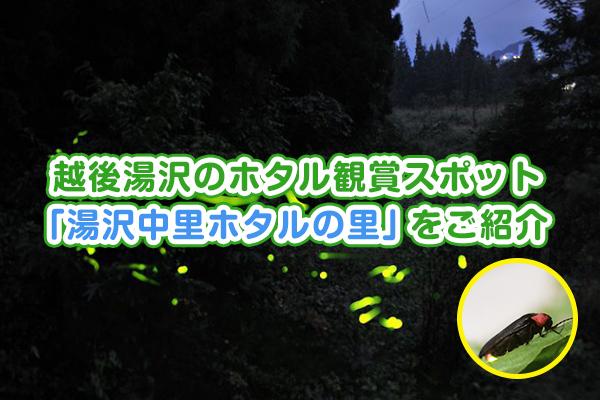 越後湯沢のホタル観賞スポット 「湯沢中里ホタルの里」をご紹介